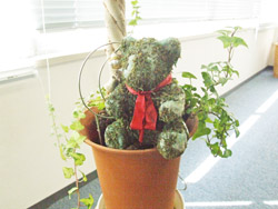 事務所にあった観葉植物